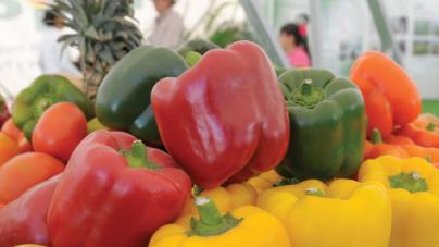 Top Ten: Lo que produce Sinaloa