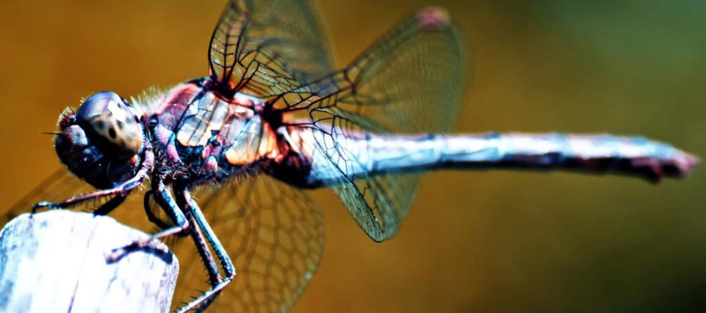 Caparazones de insectos jubilarán al plástico