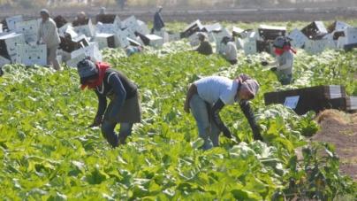 Sinaloa, entre los estados que más crecen en generación de empleos