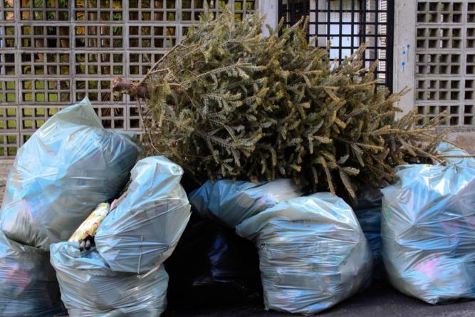 Ayuntamiento instalará 14 centros de recolección de árboles navideños en Culiacán