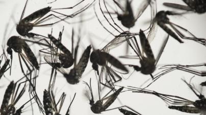 #3CosasQue… más preocupan a expertos sobre el virus del Zika