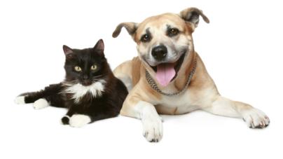 Unas 300 mil mascotas serán vacunadas contra la rabia en Sinaloa