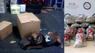 Frustra PGR intento de traficar droga por paquetería en Culiacán