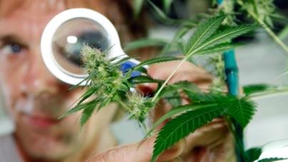 Estados Unidos acepta que la mariguana mata el cáncer