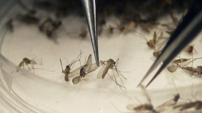 Autoriza Cofepris un millón de vacunas contra el dengue