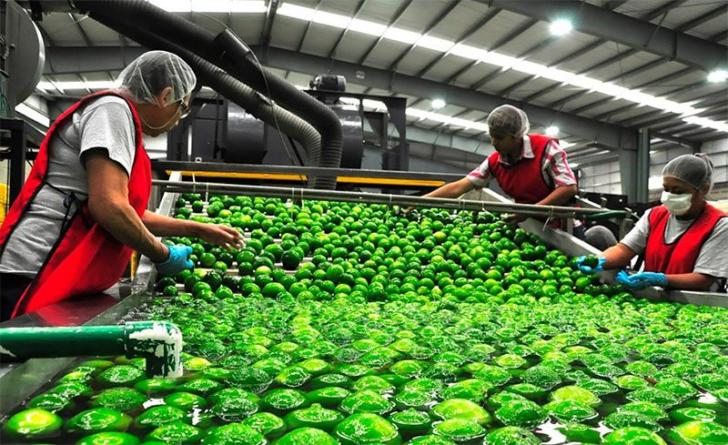 INEGI | Crece 0.3% actividad económica en julio; actividades primarias a la cabeza