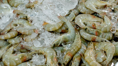 Caen capturas de camarón | Piden estudio a Inapesca en costas sinaloenses
