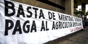 Paga Gobierno federal deuda de 126 MDP a productores sinaloenses