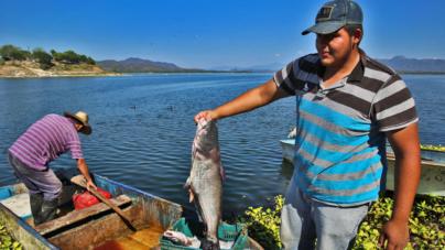 Sinaloa es primer lugar nacional en valor de la producción pesquera