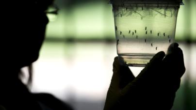 Incrementan casos de zika, chikungunya y dengue en Sinaloa