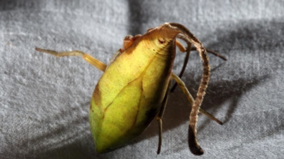 Hay una nueva araña entre nosotros | Animales reales… ¿y dónde encontrarlos?