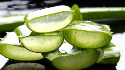 Salud orgánica | Beneficios de la sábila o aloe vera