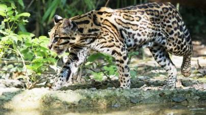 ¡¿Y las criaturas?! | Muro fronterizo ya afecta a más de 800 especies