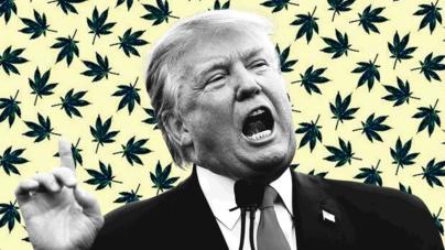 Abre Trump otro frente | Busca 'deslegalizar' la marihuana en Estados Unidos