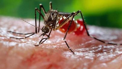 Científicos mexicanos preparan las primeras pruebas de vacunas contra el zika