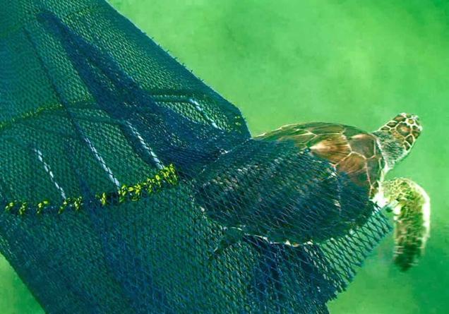 IPN promueve protección de especies marinas entre pescadores sinaloenses