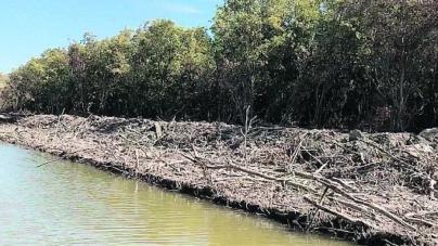 Profepa clausura obras en Navolato por afectación a manglar