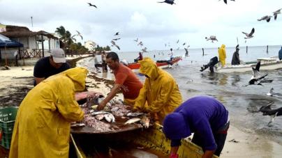 Sinaloa, el segundo mejor en capturas pesqueras en el país: Conapesca
