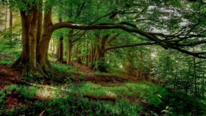 ¿Cómo vamos? | México entra al top 10 de los países más forestados y reforestados del mundo