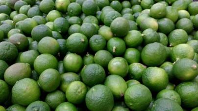 Se estabiliza producción de limón; su precio tiende a bajar: AMSDA