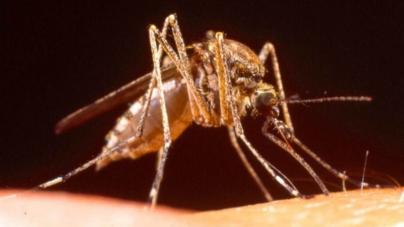 ¿Día de qué? | 'Acabaremos con el paludismo para siempre': OMS