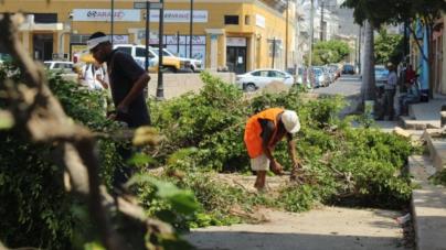 Multarán a las constructoras por el derribo de árboles en 'La Machado' de Mazatlán