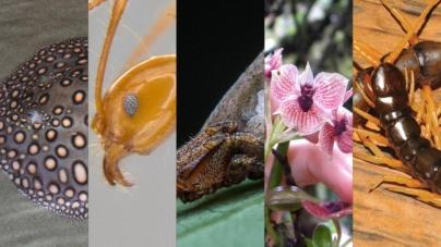 ¿Día de qué? | 10 nuevas especies descubiertas durante el último año