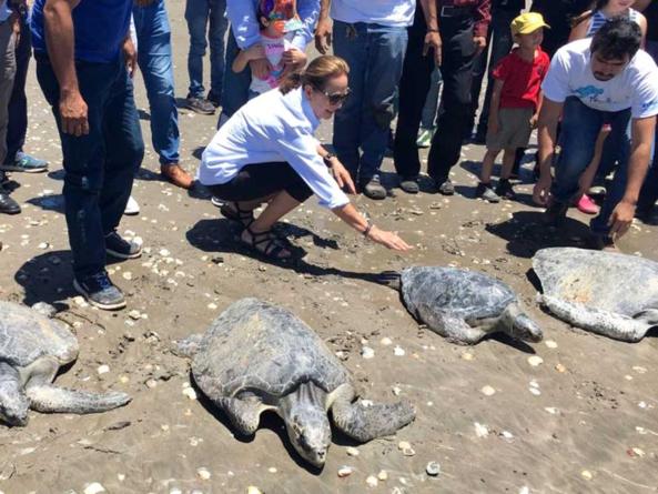 Liberan tortugas rehabilitadas e inauguran en Las Glorias área para su conservación