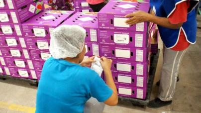 Envía Sinaloa primer embarque de mango a Europa