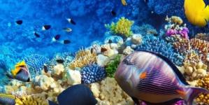 ¿Día de qué? | La ONU hace un llamado urgente para preservar los océanos