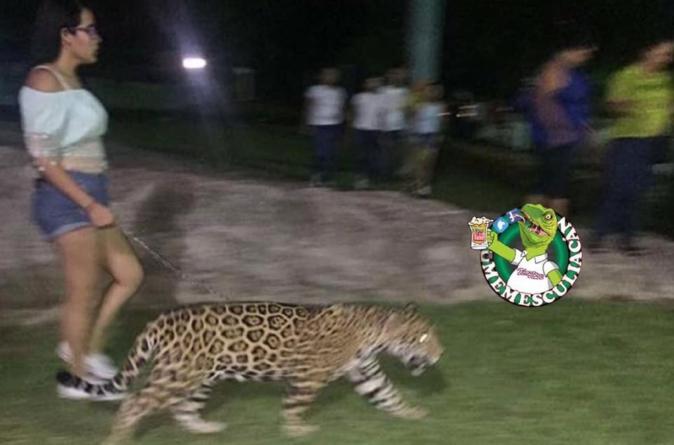 Sacar a pasear a mi Jaguar al parque y otras formas de llamar la atención en Culiacán