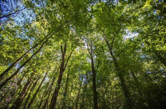 Bosques comestibles | Proyecto de reforestación buscaque Eldorado sea un enorme 'jardín botánico'