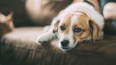 Inquilinos indeseables | ¡Cuidado! El calor podría llenar a tu mascota y tu casa de pulgas y garrapatas