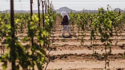 """""""Renegociación es oportunidad para que el sector agrícola salga del TLCAN"""": UNAM"""