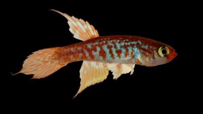 Galería | Conoce algunas de las 380 nuevas especies descubiertas en el Amazonas