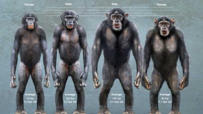 El análisis de Óscar Fidel González Mendívil | Justicia en el planeta de los simios