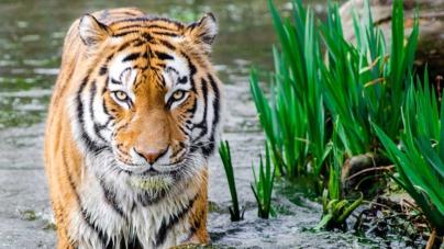 ¿Día de qué?   Animales: ¿qué tanto sabes sobre ellos?