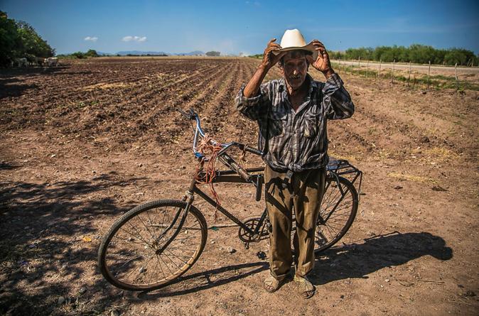 Sector primario genera el 10% de empleos en Sinaloa