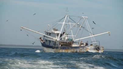 Expo Industrial 2019 posicionará a Mazatlán como potencia pesquera
