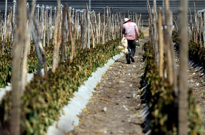 Sinaloa en quinto lugar de crecimiento del PIB durante el 2016: Inegi