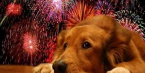 ¿Se asusta tu mascota? | El método Tellington Ttouch y otras técnicas para calmar a tu 'perrijo' este fin de año