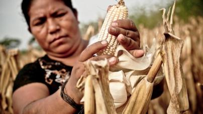 ¿Día de qué?   Activistas rurales y urbanas transforman la vida de las mujeres