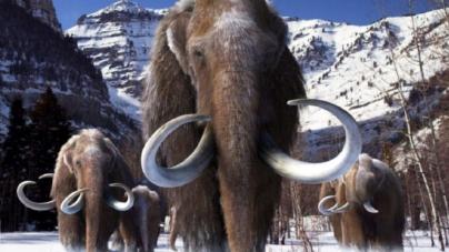 Científicos de Harvard están dispuestos a traer de vuelta a la vida a los mamuts