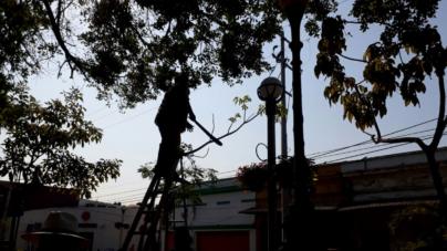 FOTOGALERÍA | Le dan última 'manita de gato' al Centro Histórico de Mazatlán