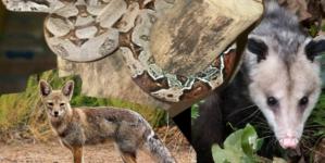 Profepa rescata y reintegra 4 ejemplares de fauna silvestre en Sinaloa