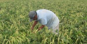 Migrantes centroamericanos podrían ser contratados por horticultores sinaloenses