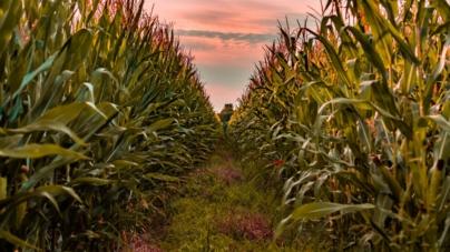 ¿Un mundo sin verduras? | Producción de vegetales disminuirá por el cambio climático