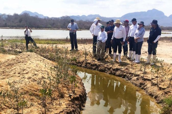 Se recuperan favorablemente más de 500 hectáreas de manglares al sur de Sinaloa
