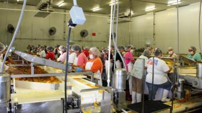 Proponen a procesadoras de mango generar energía a partir de desechos orgánicos