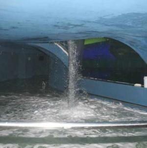 Caso tiburonario Mazatlán | El audio que revela obstrucción a la investigación